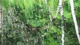 Floresta refletida no lago. - 191022320