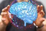 brain - 191026169