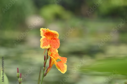 Deurstickers Klaprozen colorful, color, flower, background, spring, water, valley, lily, white, nature, beautiful, green, summer, season, flora, meadow, most, colors, pink, beauty, closeup, fresh, plant, natural, bright, bl