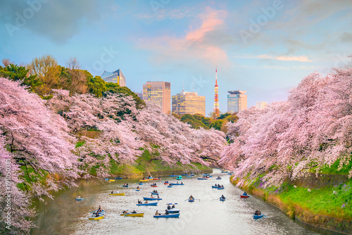 obraz PCV Chidorigafuchi park in Tokyo during sakura season