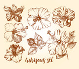 Ink hand drawn set of tropical hibiscus flowers. Botanical elements collection for design, Vector illustration. - 191052588