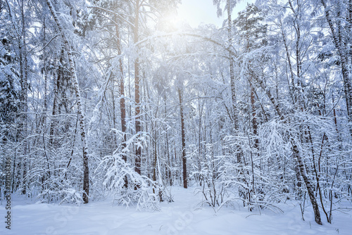 Deep forest at cold winter.