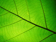 Quadro Leaf texture pattern for spring background,texture of green leaves,ecology concept