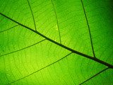 Leaf texture pattern for spring background,texture of green leaves,ecology concept - 191061109