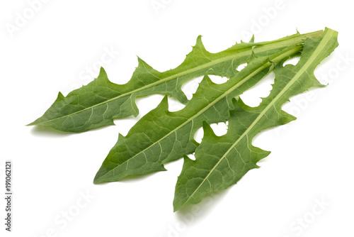 Fresh dandelion leaves