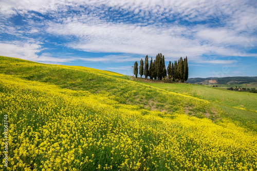 Aluminium Meloen Tuscany, rural landscape. Countryside farm, cypresses trees, green field,Italy, Europe.