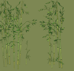 Light bamboo grove. Bamboo forest