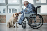 Peaceful old male sitting in invalid chair while wearing pajamas in room. He is stroking the labrador and looking at it. Dog is sitting near man - 191079919