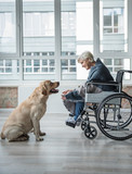 Cheerful senior woman looking at the hound. She is sitting in wheelchair covered in a blanket. Pooch is sitting in front of her - 191080163