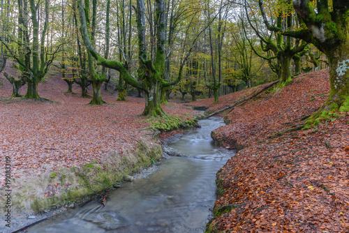 Foto op Plexiglas Herfst Otzarreta beech forest, Gorbea Natural Park, Vizcaya, Spain