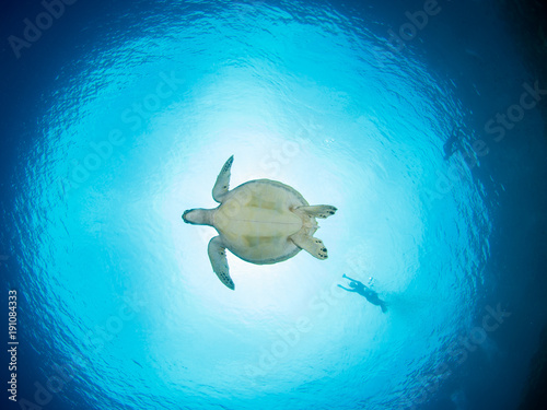 Green Turtle at Bunaken