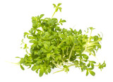 cress sprouts (Lepidium sativum) isolated on a white background - 191092744