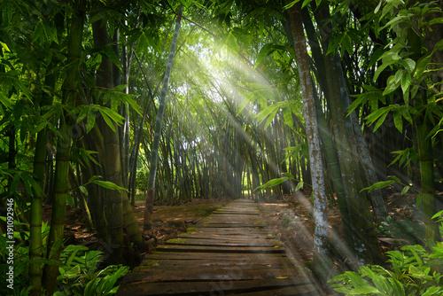 Fotobehang Bamboe Bamboo tropical forest