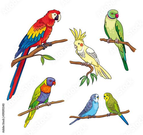 Different parrots - vector illustration