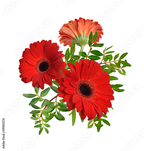Fotobehang Gerbera Composition with red gerbera flowers. Isolated.