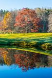 Maple Tree Reflected - 191114107