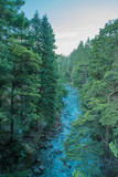 Portrait of a river with pine forest on the sides - 191122573