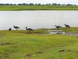 Chobe national park view - 191131188
