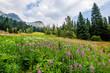 Flower Fields of Emerald Lake