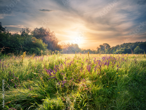 Fotobehang Lente Meadow with wildflowers under the setting sun