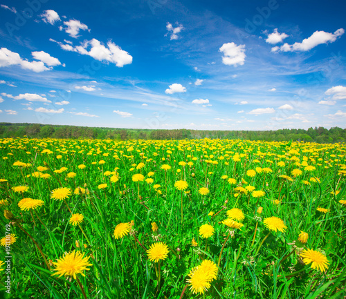 Foto op Aluminium Groene Yellow flowers hill under blue sky