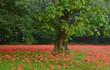 아침에 보는 빨간 꽃무릇