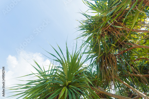 Fotobehang Natuur coconut palm tree on sky background