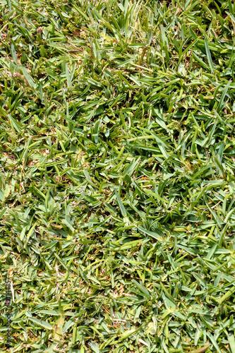 Deurstickers Gras Green Grass Pattern Texture