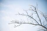 Iced Branch - 191149398