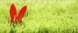 Osterhase mit bunten Eier im Gras