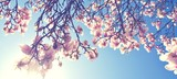 Fototapety Magnolien Blüte im Frühling