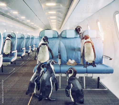 penguins  in the airplane cabin.