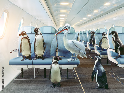 penguins and pelican   in the airplane cabin.
