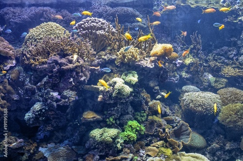 Oceanographic aquarium at the City of Arts and Sciences in Valencia, Spain 16/08/2017 15:00