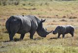 Nashorn mit Baby - 191204708