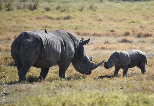 Fotobehang Neushoorn Nashorn mit Baby