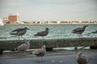 Seagulls taking in the breeze of the seaport in the Boston harbor.