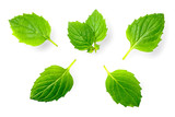 fresh herb, green peppermint isolated on white - 191218143