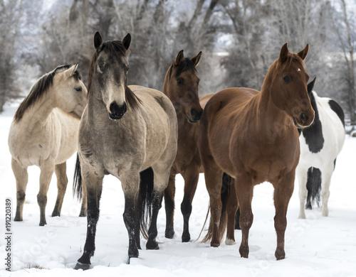 Foto Murales Horses Hanging