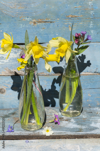 Bouquet of Narcissus flowers in a glass vases  on a blue wooden background