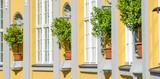 decorative citrus trees - 191223554