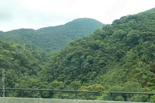 Fotobehang Khaki árvores