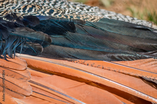 Fotobehang Pauw Gros plan du Paon dans un parc zoologique