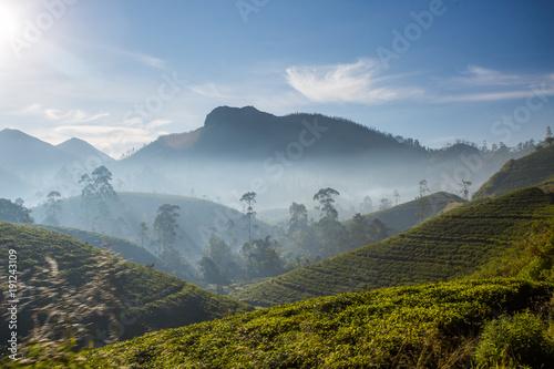 Beautiful green tea plantation in Sri Lanka