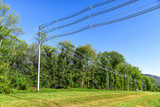 Horizontal shot of  high voltage power lines next to some green trees. - 191243354