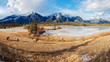 Panoramic view of bighorn sheep (Ovis canadensis) in the landscape, Jasper National Park, Alberta, Canada