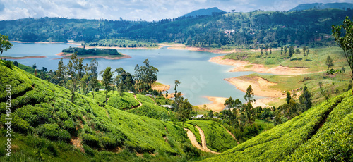 Beautiful view on tea plantation near Nuwara Eliya, Sri Lanka - 191252588