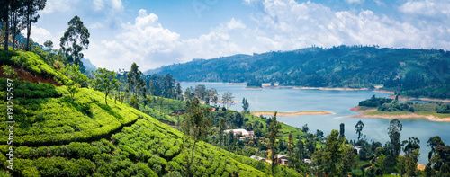 Beautiful view on tea plantation near Nuwara Eliya, Sri Lanka - 191252597