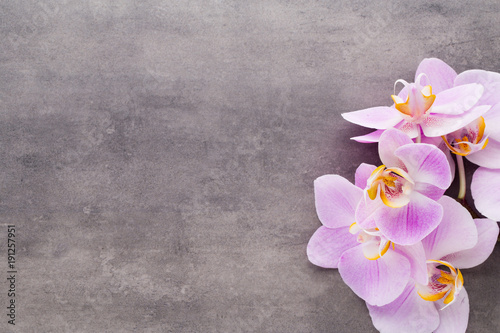Fototapeta Pink orchid flower on a gray textured background, space for a text.