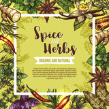 Herb and spice sketch label with seasonings frame - 191270534